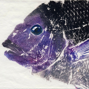 porgy fish print