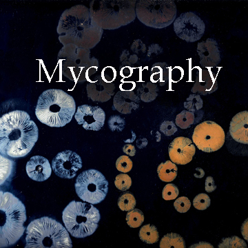 Mycography