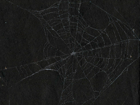 spider beb prints